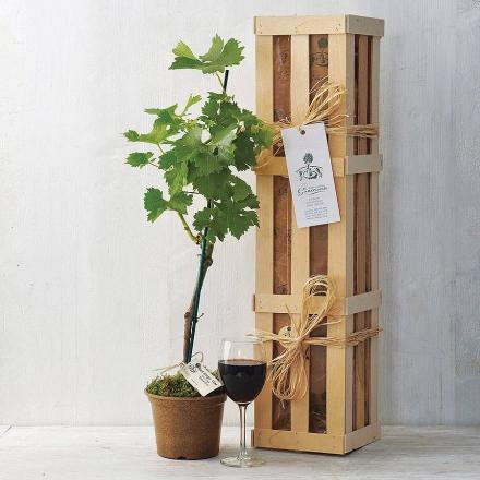 Grapevine Gift Set